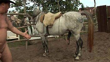 Penis blasen pferde '+'